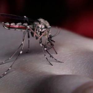 Yeah Yeah Yeahs – Mosquito (video)